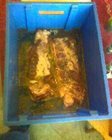 poitrine de porc  salée au sel nitrité et fumée à froid